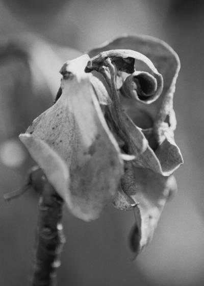 Succulent_decadence