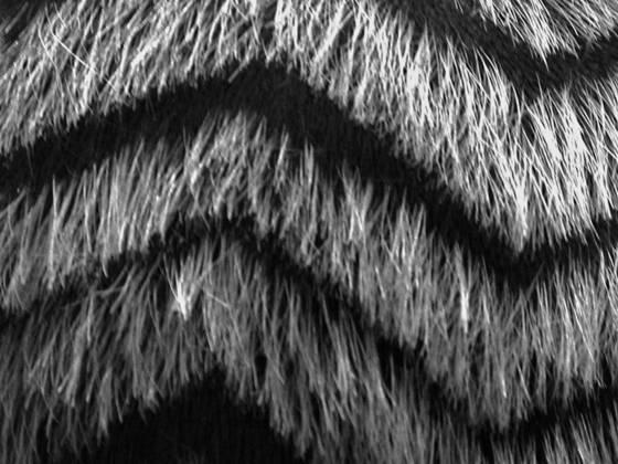 Straw_hair