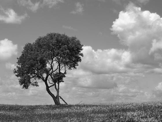 Lone_tree