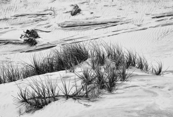 Dune_grass