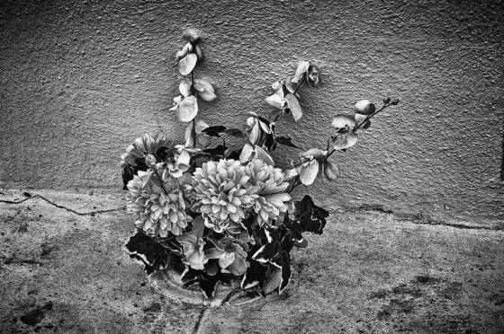 Grave_flowers_1