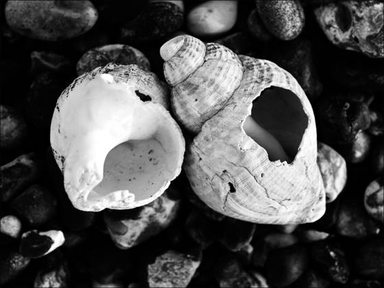 Empty_shells