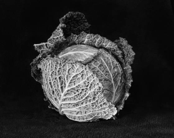 Macro_cabbage