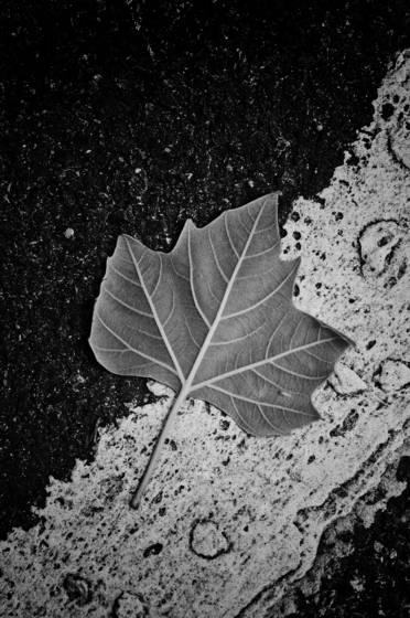Leaf__2