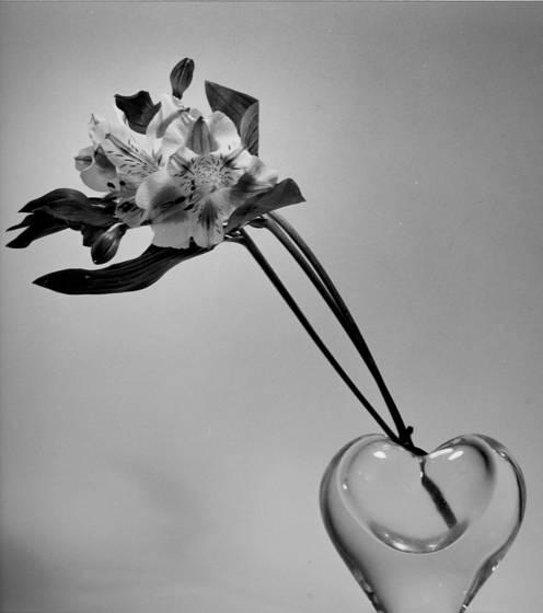 The_flower