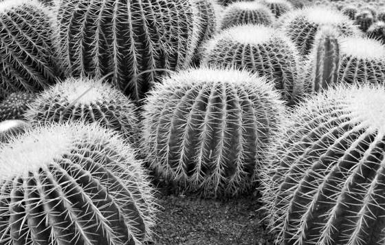 Spherical_cactus