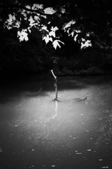 Branch_in_water