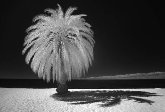 Palm tree in cabo rojo