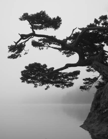 Oriental_1