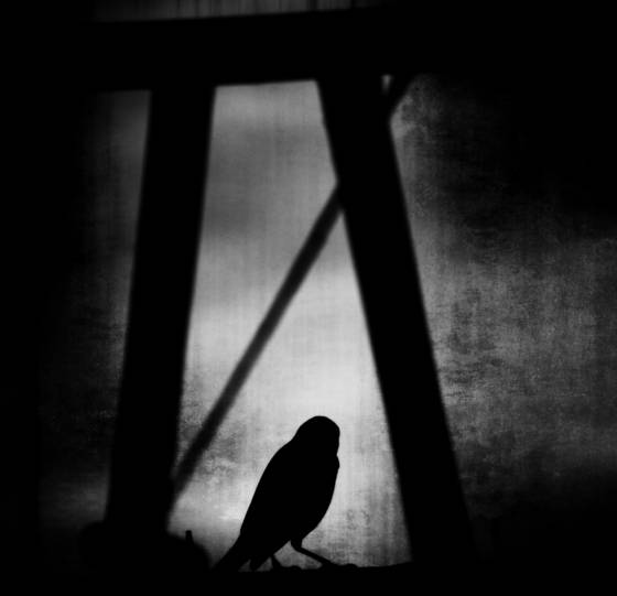 Bird_in_silhouette