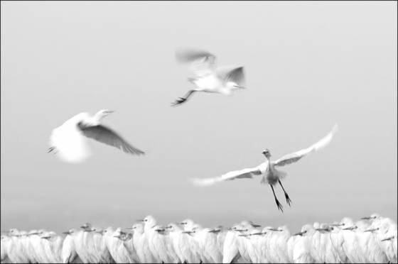 Landing_patterns