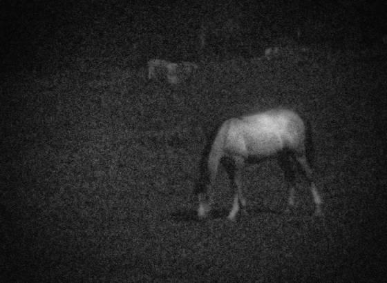 Wild_horse_dream