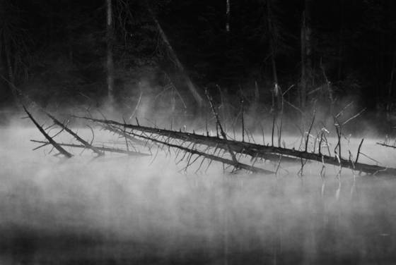 Misty_morning_pond