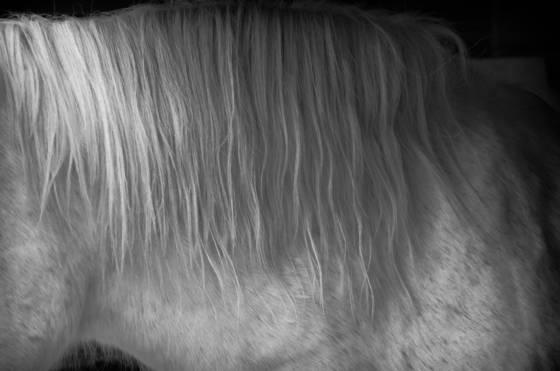 White_mare