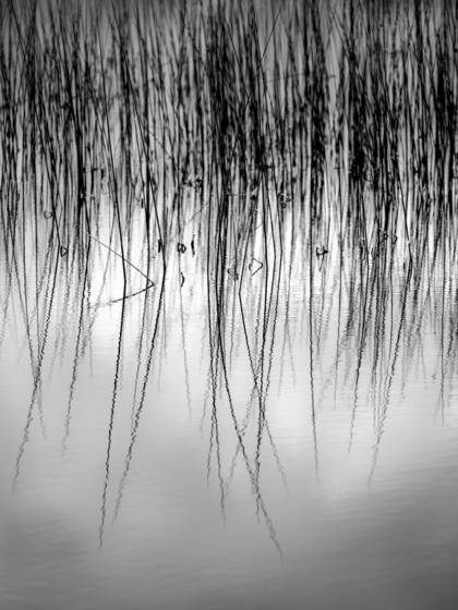 Reflections_of_reeds