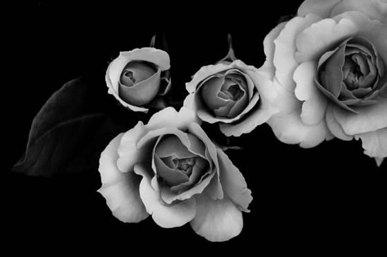 Modern_floral