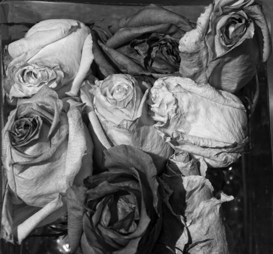 Old_roses