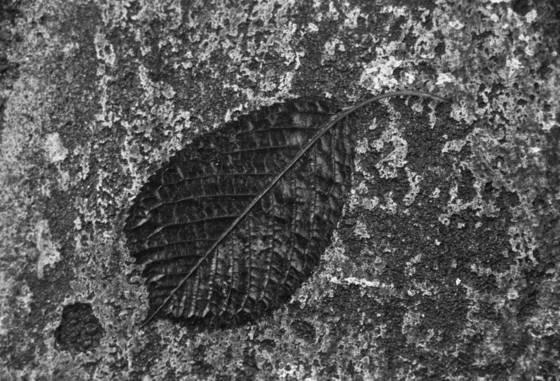 Dissolving_leaf