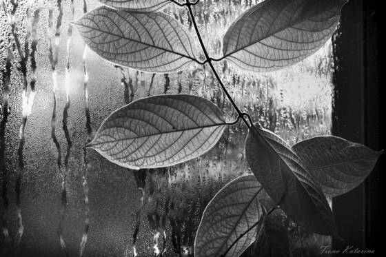Window_leaves