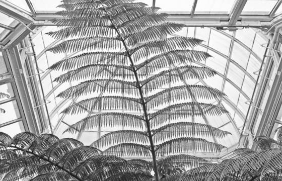 Ny_botanical_gardens
