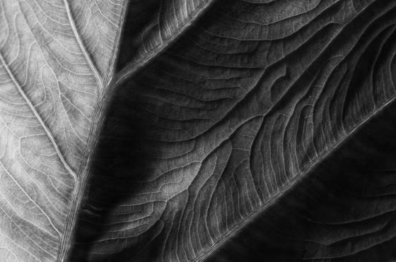 Leaf_lines