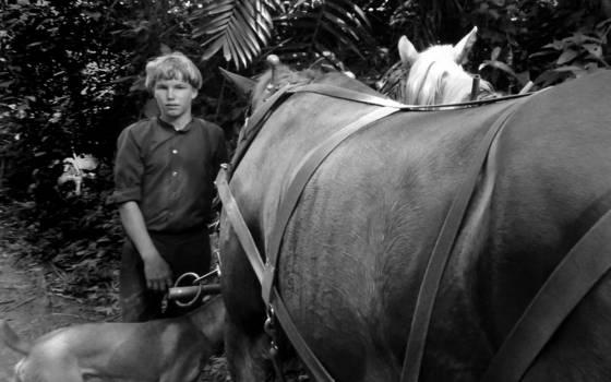 Horse_boy