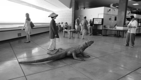 Large_lizard
