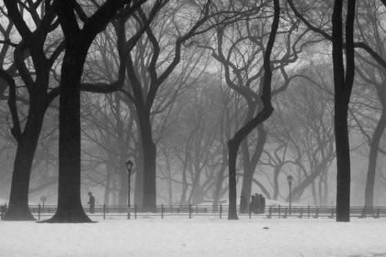 A_central_park_stroll