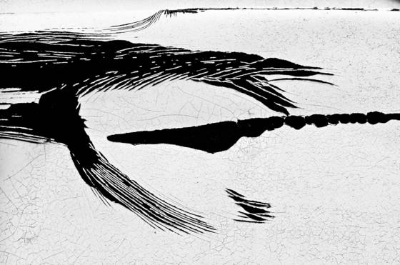 Desert_dragon