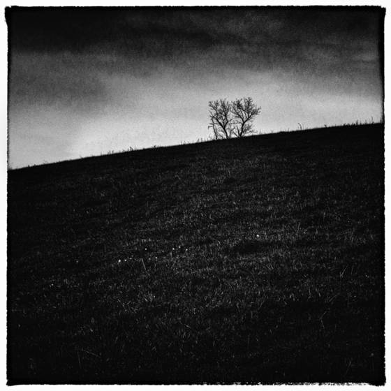 Tree_on_hill