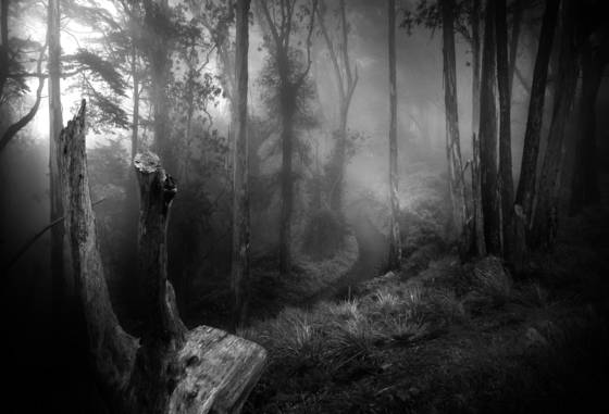 Foggy_mountain_trail