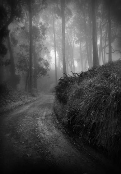 Misty_trail
