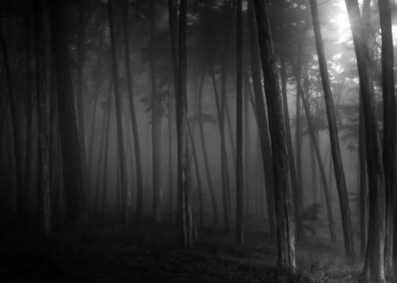 Presidio_forest