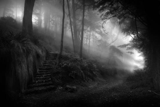 Primordial_woods
