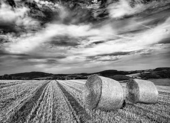Summer_hay