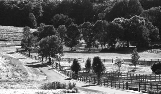 Horse_farm