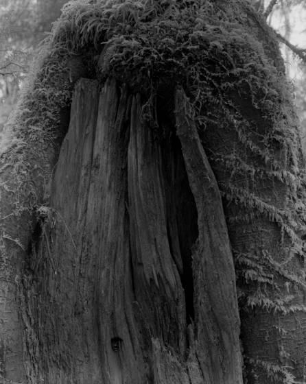 Stump___moss