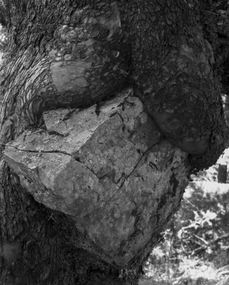 Tree___rock