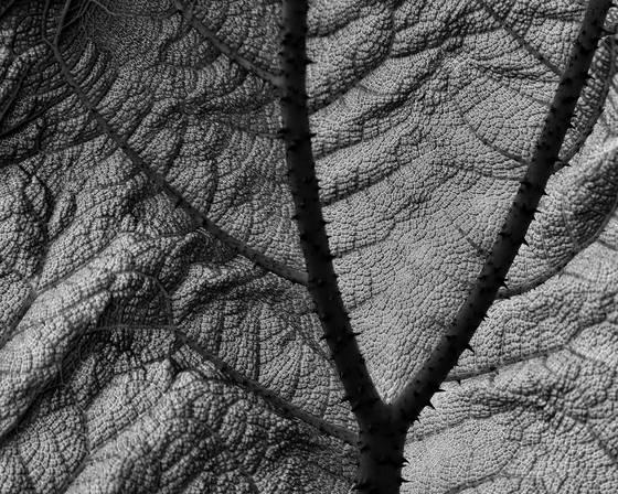 Leaf_detail