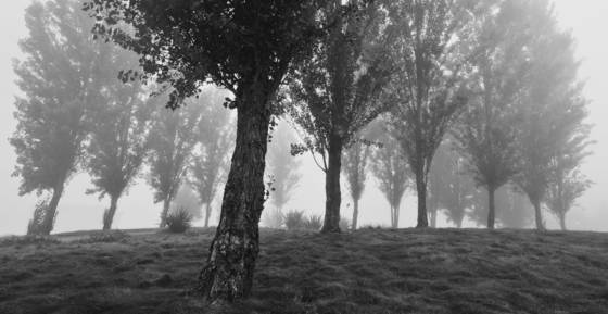 Trees_in_the_mist