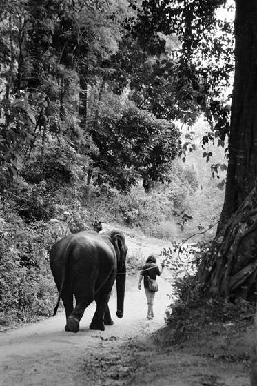 Elephant_walk