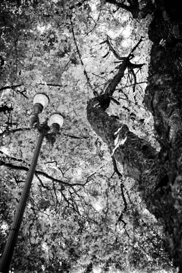 The_streetlight