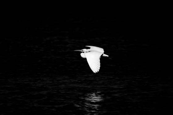 Bird__1