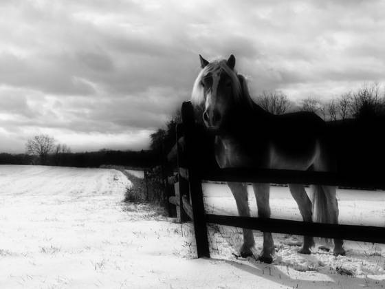 Horse___snow_covered_field