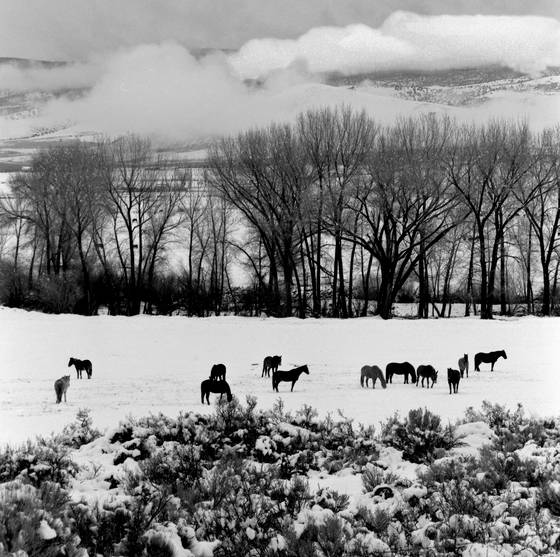 Horses_in_snow