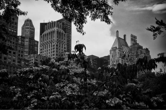 Skyline_central_park