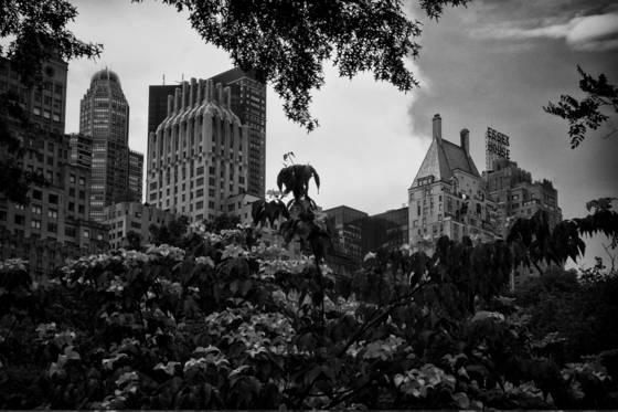 Skyline_central_park