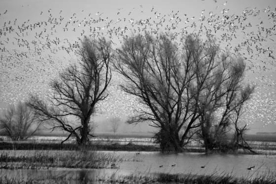 Birds___trees