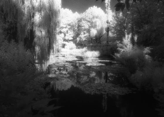 Monet_s_garden