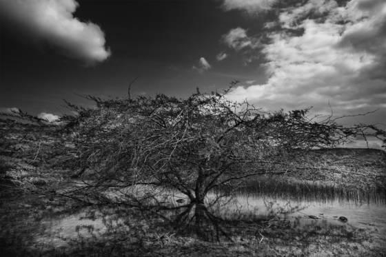 White_lagoon